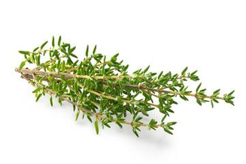 Branches de thym frais